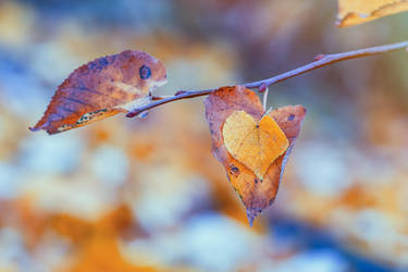 From autumn, with love by FeliDae84
