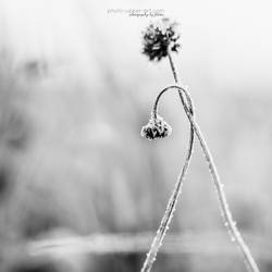 Hang in there... by FeliDae84