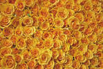 Bed of Roses by ninaheather