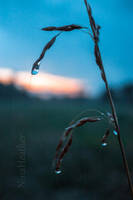 After the rain by ninaheather