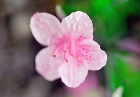 Flower No 5 by captsolo