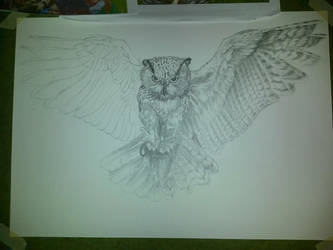Eagle Owl Sketch by Aarki