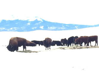 Bison and Cattle II by Silo34