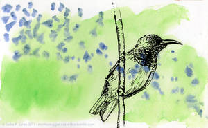 Sunbird on Green by cael-illus
