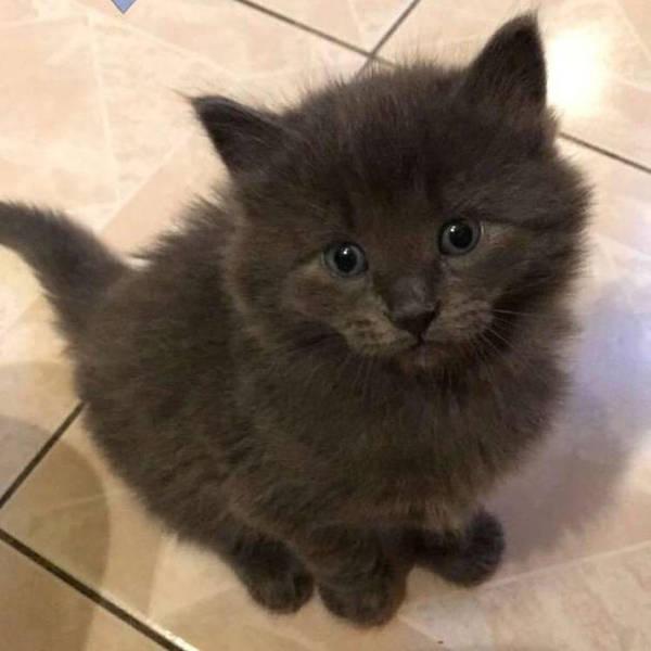 New Kitten by LaViolaViolaRosa