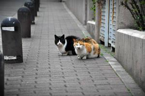 Neighbourhood cats by Openget
