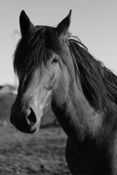 horse by Ziemek1988