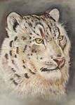 Snow Leopard by LonDiamond
