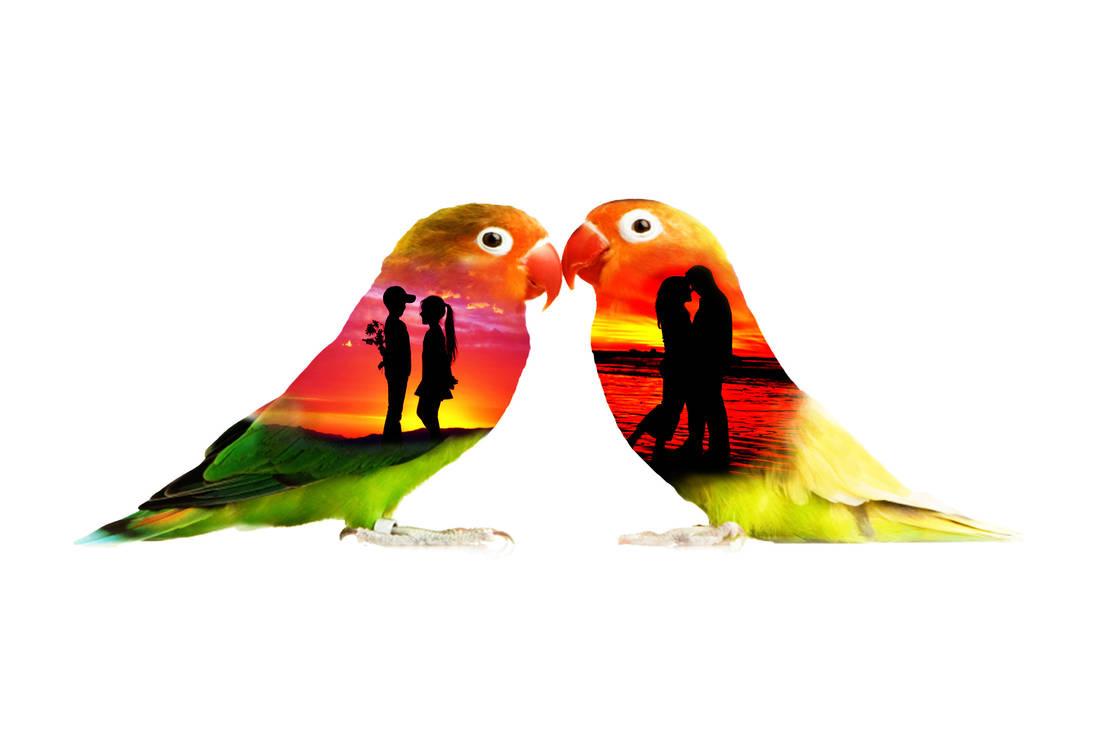 Love Birds by LonDiamond