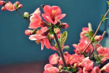 Spring is coming by SweetKotori
