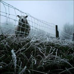 awakening of the winterfog by ChiiiChan