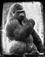 Gorilla by PatriceChesse