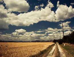 summer field II by torobala