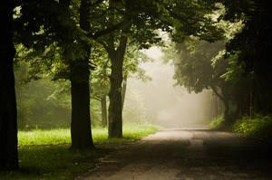 a foggy morning IV by torobala