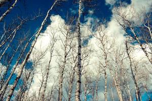 reach the sky by torobala