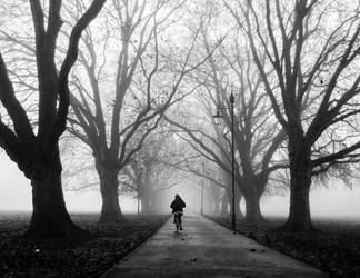 Foggy Path I by torobala