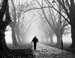 Foggy Path III by torobala