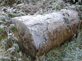 Frosty log (2) by artjuggler