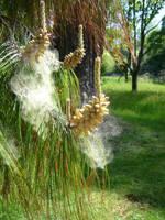 Pollen count by artjuggler