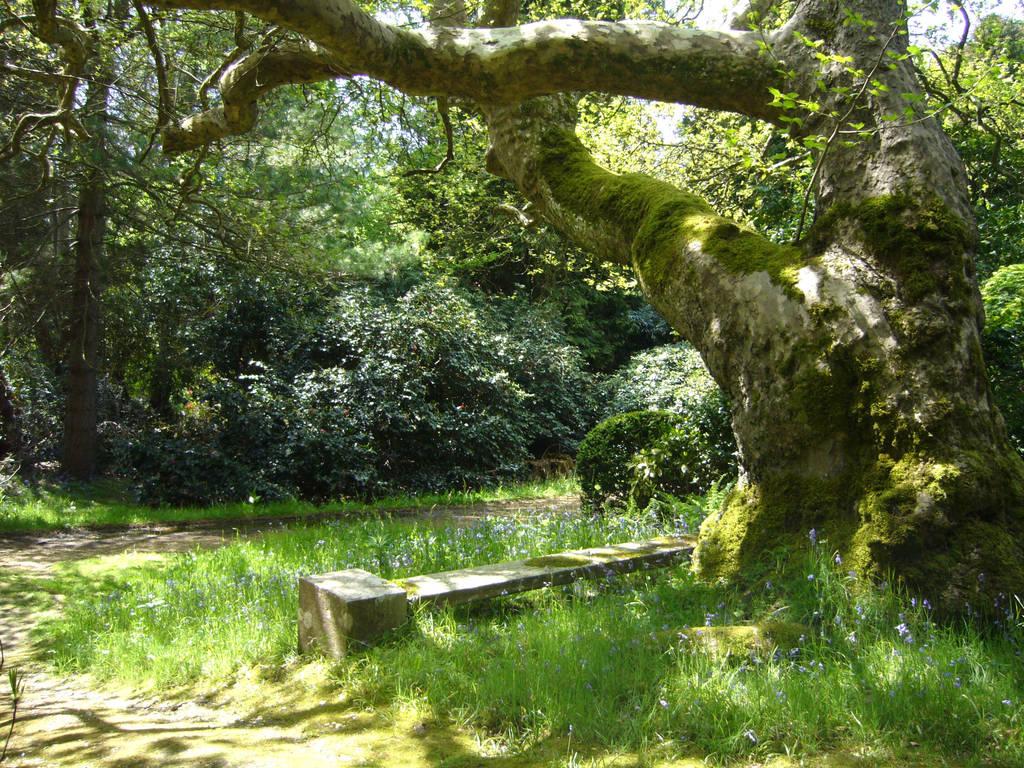 Woodland seat by artjuggler