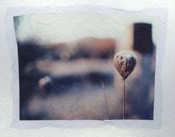 Polaroid Transfer 3 by Ipine4you