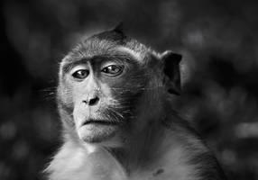 Portrait of a monkey by Phoenixstamatis