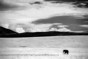 Ngorongoro by Phoenixstamatis