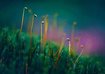 Star Moss by Phoenixstamatis