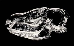 X-rayed by majspanda
