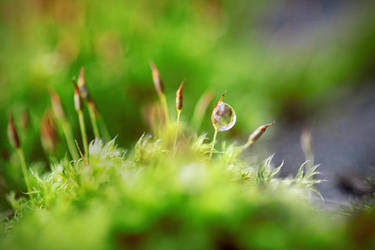 dewdrop of spring by X-chromosome