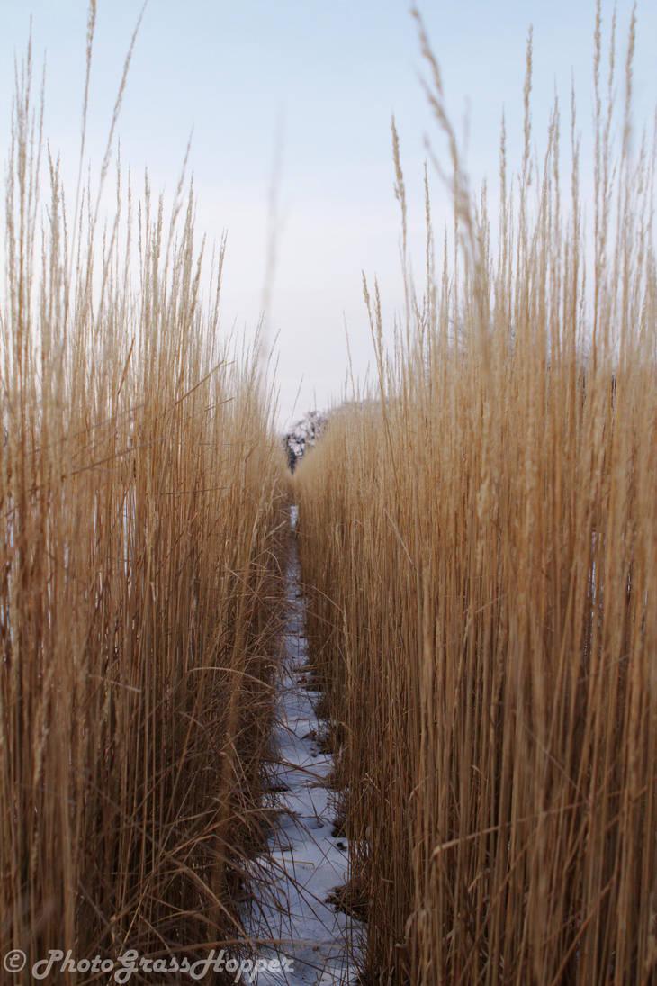 Winter grass by PhotoGrassHopper