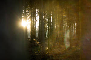 Forest at sunset 5 by mprangenberg