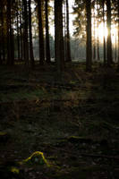 Forest at sunset 7 by mprangenberg