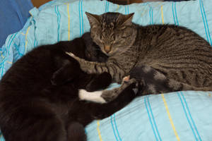 Cat love by mprangenberg