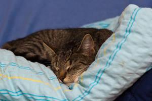 Sleeping soundly by mprangenberg