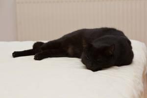 Sleeping Leo by mprangenberg