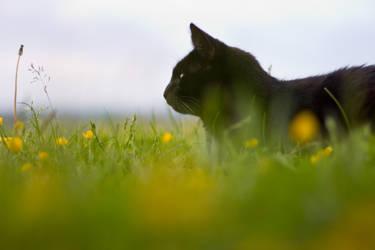 Leo in the grass by mprangenberg