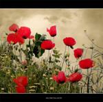 my poppyes by eleganceee