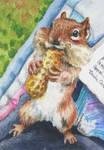 Jocelyne's Chipmunk, ATC by waughtercolors