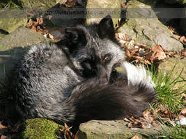 beautiul fur coat... by KIARAsART