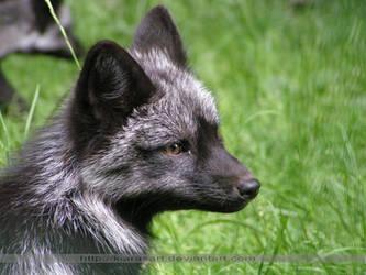 baby fox face by KIARAsART