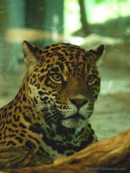 Jaguar face by KIARAsART
