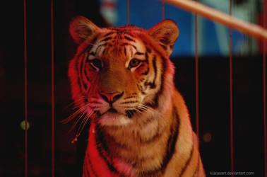 young circus tiger by KIARAsART