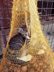 Kitten by VelkokneznaMaria