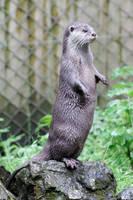 Otter 02 by LydiardWildlife