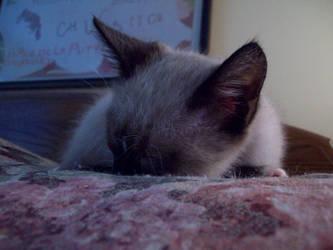 Sweet Pea Sleepy Time by Mephonix