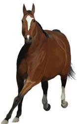 Unfinished horse by Shay-auralia