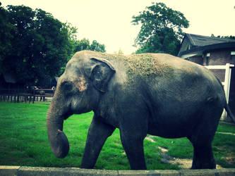 The last days of an elephant, Marta by Anastasija96