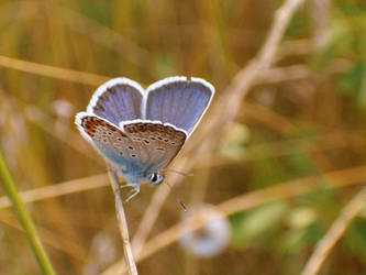Blue Angel by saabie