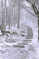 The Snow Came Down on Stairs by saabie